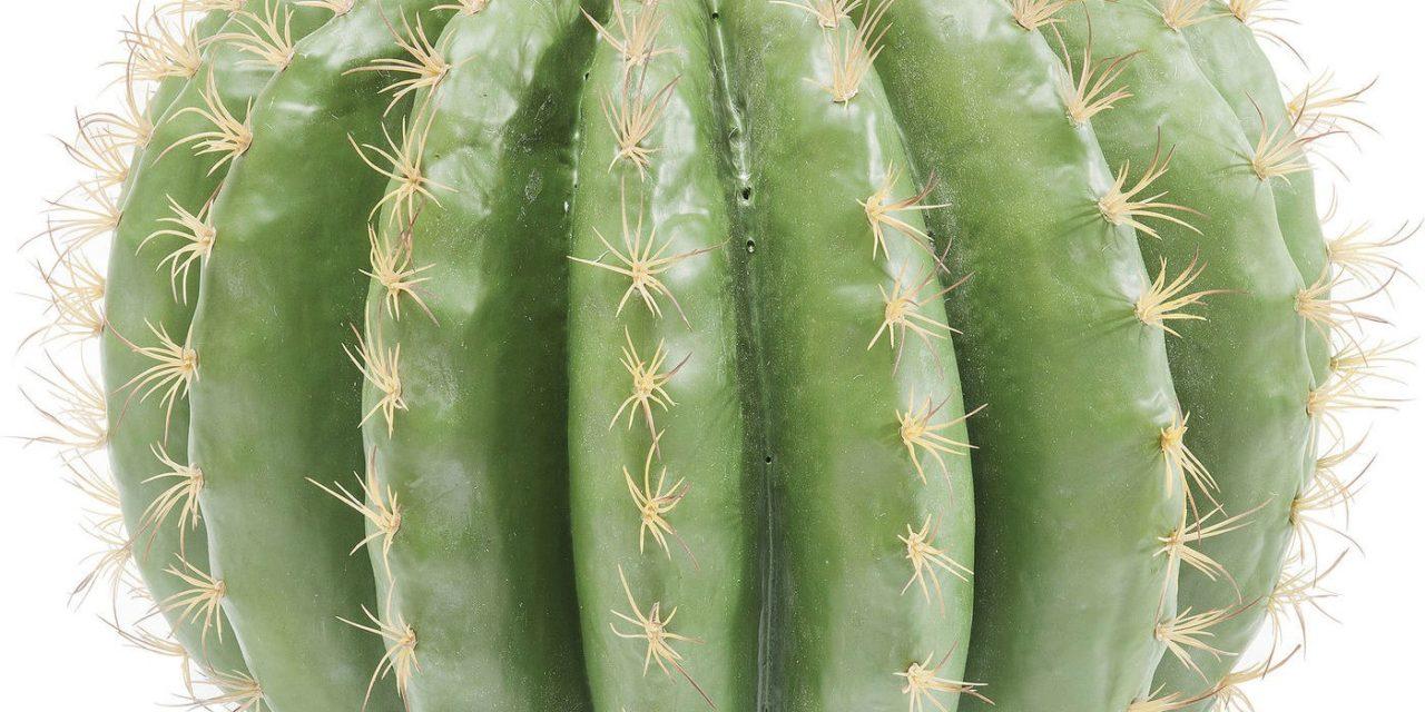 Dekoration Plante Cactus Ball 44 cm