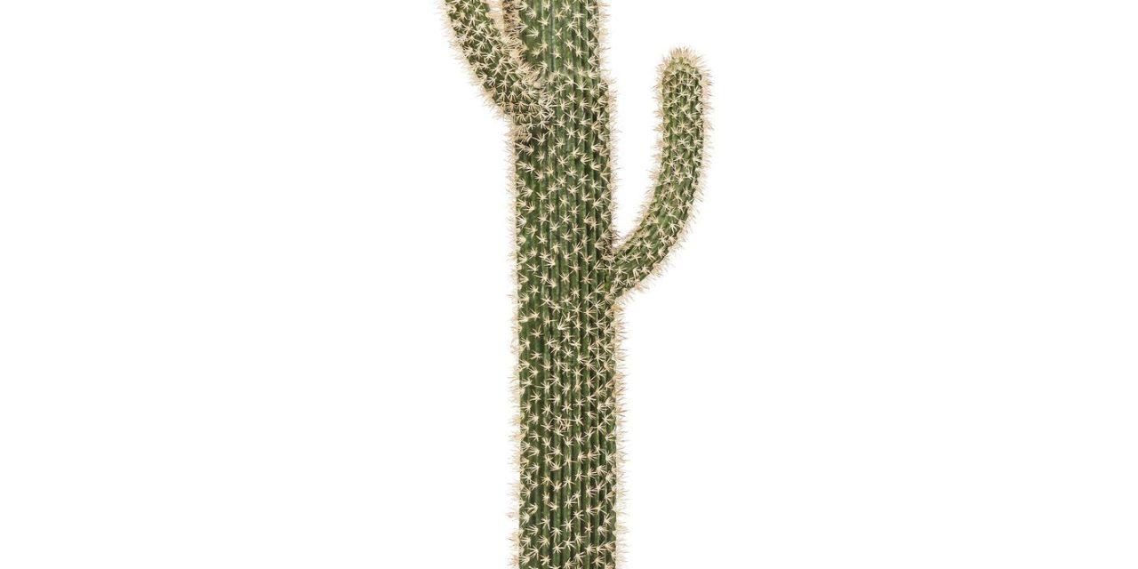 Dekoration Plante Cactus Pot 170 cm