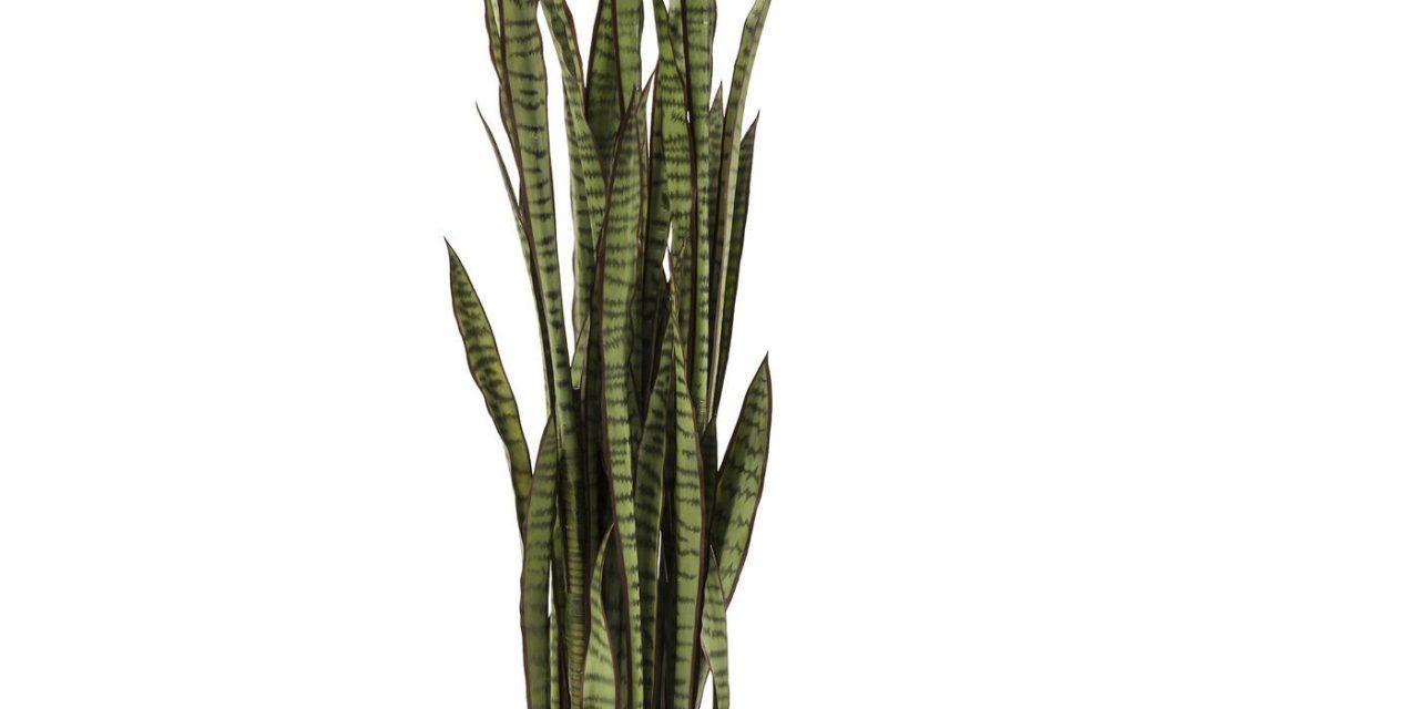 Sansewieria plante fra Kare Design til dit hjem