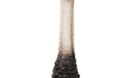 KARE DESIGN Vægskulptur Ostrich