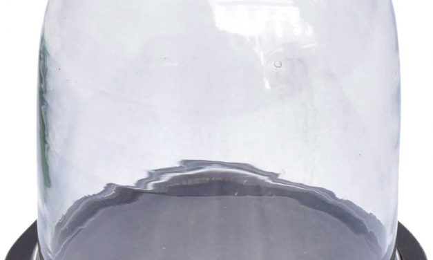 TRADEMARK LIVING Fin lille glasklokke med træbund – sort