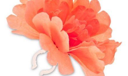Blomst Basil rød tangerine til styr eller stel